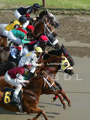 Saratoga racing, 7/28/04. Saratoga Race Course, Saratoga Racetrack, beautiful horse racing, Thoroughbred racing, horse, equine, racehorse, morning mood