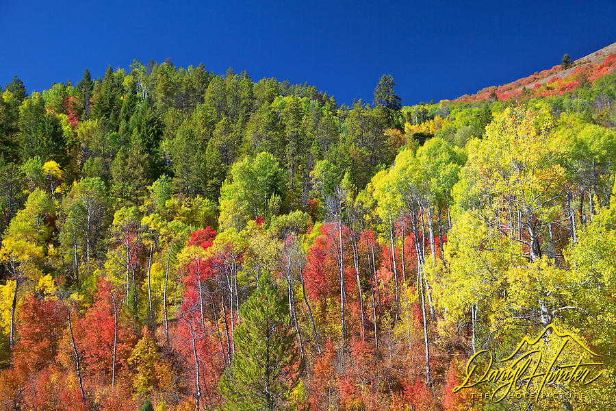Fall Colors, Swan Valley, Idaho