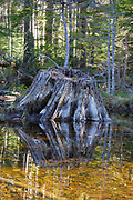 Pemigewasset Wilderness - Reflection of tree stump in wetlands area along the Franconia Brook Trail during the spring months in the White Mountains, New Hampshire USA. This trail follows the old East Branch & Lincoln Railroad bed, which was a logging railroad in operation from 1893 - 1948.