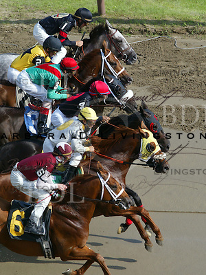 Saratoga racing, 7/28/04. scenic, mood, horse racing, pretty, racehorse, horse, equine, racetrack, track, saratoga