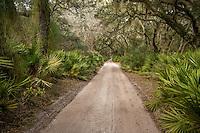 Live oak and spanish moss on the Cumberland Island National Seashore.