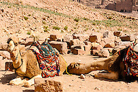 Petra is Jordan's most visited tourist attraction. Dromedary.