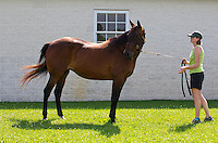 Champion racemare Armbro Feather p, 2, 2:03.3h; 3, 1:53.4; 1:51.3 ($1,454,927), by Most Happy Fella - Brets Velvet.  At Winbak Farm, Maryland.