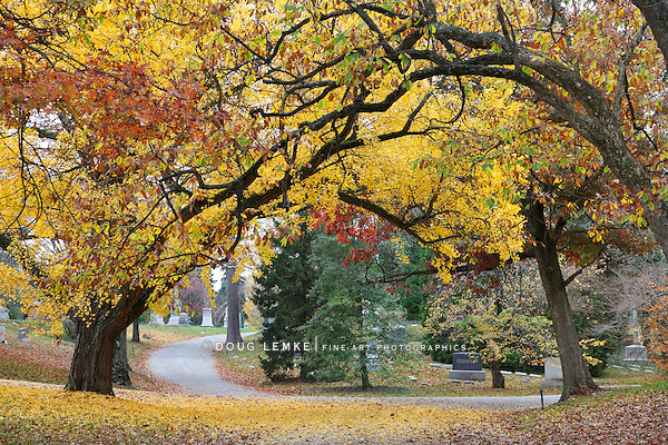 A Canopy Of Blazing Yellow Trees Over A Quiet Cemetery Road In Autumn, Southwestern Ohio, USA