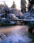 Seattle, WA<br /> Winter sun illuminates snow covered trees and foot bridge in Kubota Garden