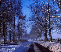 English country lane in the winter. Topcliffe, North Yorkshire