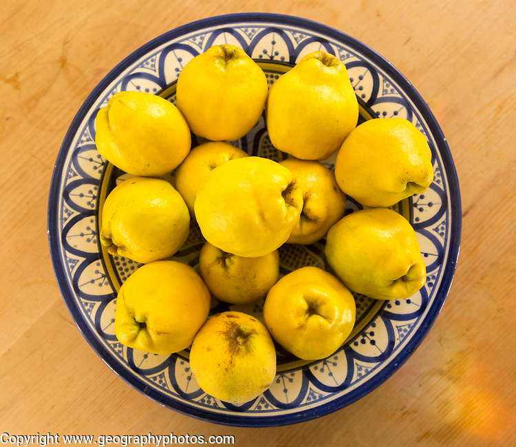 Close up bowl dish of fresh quince fruit on kitchen table, UK overhead view looking down