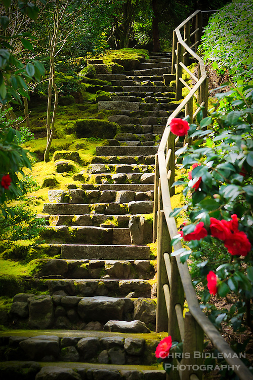Stone stairs heading up from Natural Garden (shizen shiki niwa) in Portland Japanese Garden with red camellias in bloom