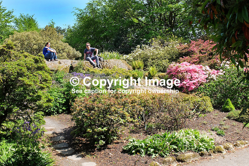 National Trust, Rowallane, Saintfield, N Ireland, UK, rock garden, May, 2015, 201505231100<br />