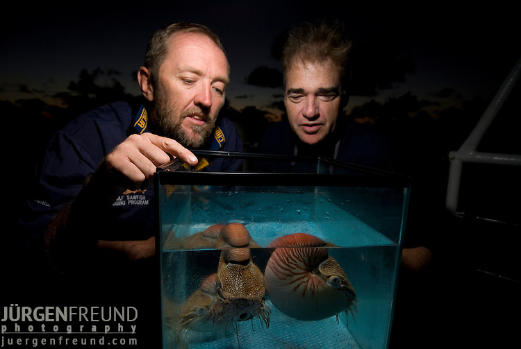 Andy Dunstan & Dr. Peter Ward observing caught chambered nautilii