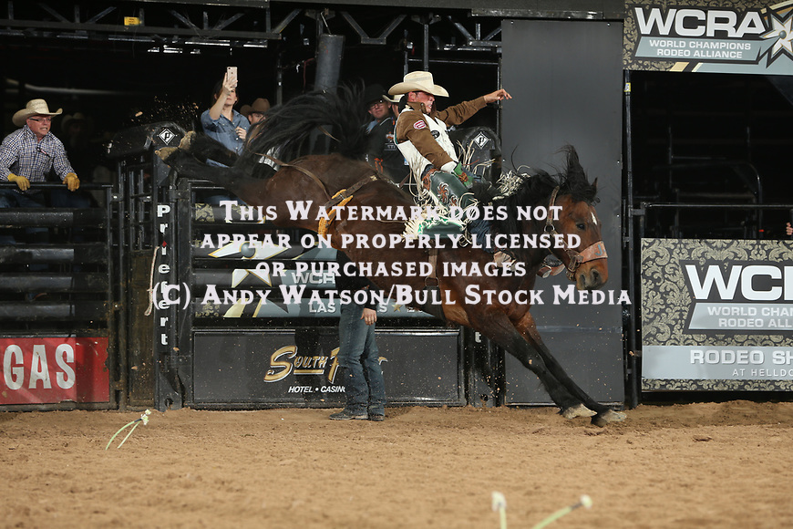 Richmond Champion rides J Bar J Inc's Painted Brush for 86.5 during the second round of the Las Vegas WCRA rodeo. Photo by Andy Watson