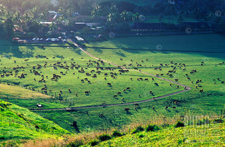 Grazing land found in the countryside of Hana, Maui