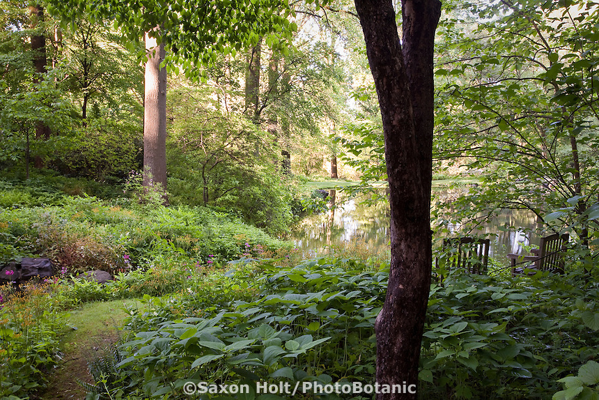 Chairs in shady secret garden overlooking pond in woodland garden, environmentally-responsible, native plant sustainable garden, Mt Cuba Center Delaware
