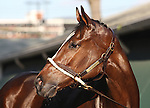 Monmouth Park Horses 2014