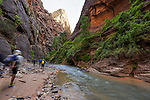 Walking into The Narrows along The Virgin River in Zion National Park, Utah, USA