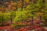 Fall foliage in Acadia National Park, Maine, USA
