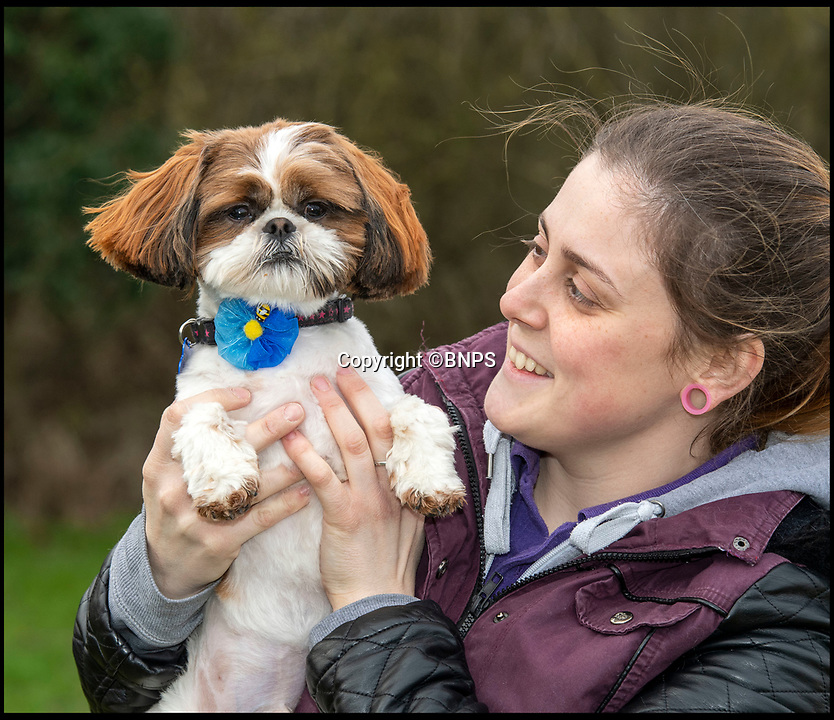 BNPS.co.uk (01202 558833)<br /> Pic: PhilYeomans/BNPS<br /> <br /> Plucky Bertie with rescue centre worker Melissa Bull.<br /> <br /> Meet Bertie the bow-legged Shih-Tzu puppy...<br /> <br /> A rescue centre has launched a crowd funding page to raise the £4,000 needed to help him run around again.<br /> <br /> One year old Bertie has been abandoned by his owners who couldn't afford the cost of his life changing operations, but Ardley rescue centre boss Annabelle Weir from Bicester in Oxfordshire is determined to give bow-legged Bertie a second chance.