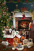 GIORDANO, CHRISTMAS ANIMALS, WEIHNACHTEN TIERE, NAVIDAD ANIMALES, paintings+++++,USGI2976,#xa# ,cats,
