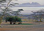 """SLEEPING MAN HILL"".   Sacred Ibis are in the forground in this early morning view from the front of our tent camp on Lake Elmenteita.  The lake abuts the Lake Nakuru National Park in the Great Rift Valley,  Kenya, Africa"