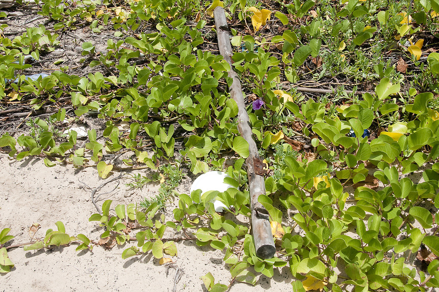 isabela is a pretty pristine island of the Galapagos, but still plastic si found everywhere on the island, even on beaches where visitors are not allowed