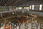 View of Listowel mart on Wednesday