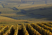 Europe/France/Champagne-Ardenne/51/Marne/Oger : Vignoble