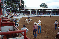 Wide view of rodeo grounds from above the chutes as a cowboy rides a bucking horse. animals, horses, cowboys, western, stadium and crowd, sports. Oregon, St Paul Rodeo Grounds.