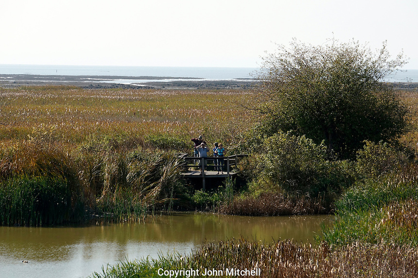 Observation platform and bird watchers at the George C. Reifel Migratory Bird Sanctuary, Delta, BC, Canada