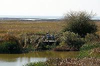Observation platform and bird watchers at the George C. Reifel Migratory Bird Sanctuary, Delta, BC, Canada