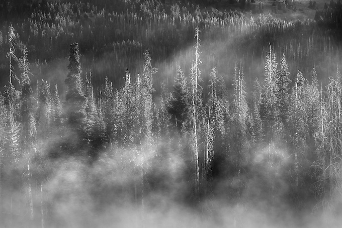 First morning light reflected on the mist in the Oregon Cascades.