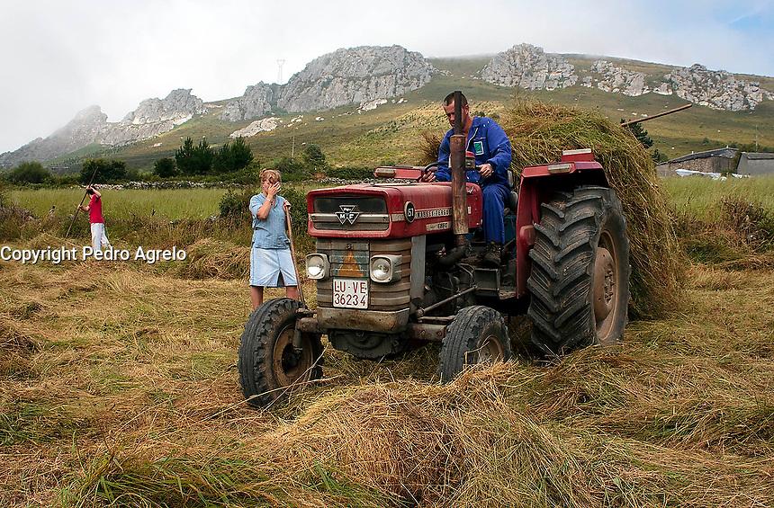 Fecha: 2010 Verano. Recogiendo hierba  en Villarin de Cubilledo. A Lastra. O Cadavo. Lugo. Foto:Pedro Agrelo