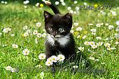 Marek, ANIMALS, REALISTISCHE TIERE, ANIMALES REALISTICOS, cats, photos+++++,PLMP2279,#a#