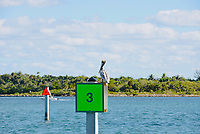 "Pelican ""standing Guard"" on intracoastal waterway channel marker."