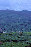 The Images from the Book Journey through Color and Time,  Indonesia,a tea plantation in central Java, women picking tea