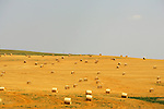 Straw bales along highway 85 north of Bowman.
