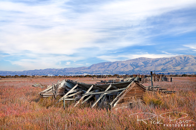 An abandoned shack sunk into the marsh up to its roofline at the ghost town of Drawbridge in southern San Francisco Bay. Drawbridge was a hunting village started in the 1880's with the last resident leaving in the 1970's.
