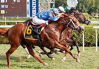 Qurbaan (no. 6) wins the Bernard Baruch Handicap (Grade 2), Sep. 3, 2018 at the Saratoga Race Course, Saratoga Springs, NY.  Ridden by Irad Ortiz, Jr., and trained by Kiaran McLaughlin, Qurbaan finished  a nose in front of Forge (no. 3) and Projected (no. 2) in a three horse photo finish.  (Bruce Dudek/Eclipse Sportswire)