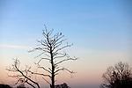 Europa, DEU, Deutschland, Nordrhein Westfalen, NRW, Rheinland, Niederrhein, Leuth, Naturpark Maas-Schwalm-Nette, Abenddaemmerung, Kormoran auf einem Baum, Phalacrocorax carbo, Kategorien und Themen, Natur, Umwelt, Landschaft, Landschaftsfotos, Landschaftsfotografie, Landschaftsfoto, Tourismus, Touristik, Touristisch, Touristisches, Urlaub, Reisen, Reisen, Ferien, Urlaubsreise, Freizeit, Reise, Reiseziele, Ferienziele<br /> <br /> [Fuer die Nutzung gelten die jeweils gueltigen Allgemeinen Liefer-und Geschaeftsbedingungen. Nutzung nur gegen Verwendungsmeldung und Nachweis. Download der AGB unter http://www.image-box.com oder werden auf Anfrage zugesendet. Freigabe ist vorher erforderlich. Jede Nutzung des Fotos ist honorarpflichtig gemaess derzeit gueltiger MFM Liste - Kontakt, Uwe Schmid-Fotografie, Duisburg, Tel. (+49).2065.677997, archiv@image-box.com, www.image-box.com]