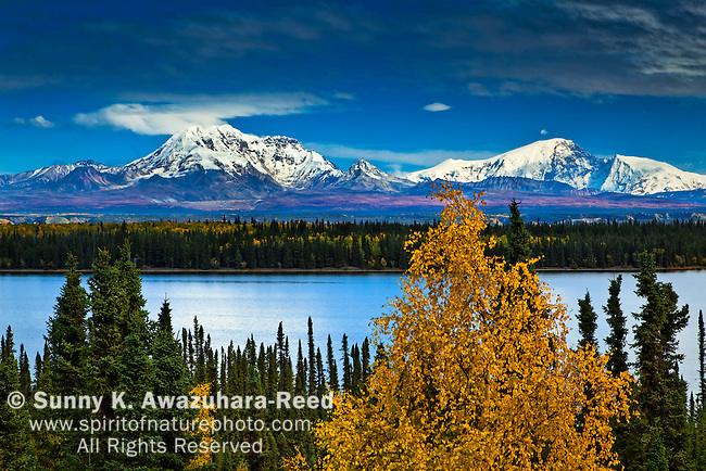 Mt. Sanford, Mt. Drum, Willow Lake, WFall Colors, rangell - St. Elias Park, Alaska