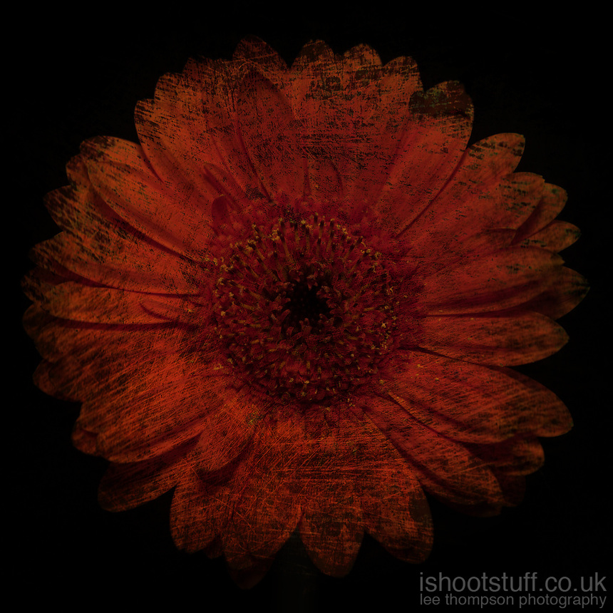 DIRTY FLOWER - Delivered as 1535 x 1535 pixels at 300dpi
