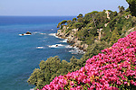 Flowers along the Mediterranean  Sea in Bogliasco, near Genova, Italy. .  John offers private photo tours in Denver, Boulder and throughout Colorado, USA.  Year-round. .  John offers private photo tours in Denver, Boulder and throughout Colorado. Year-round.