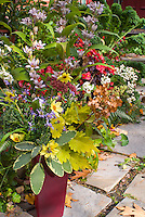 Fall autumn cut flowers & foliage in vase, harvested bouquet, including Tricytis toad lilies, Coreopsis Full Moon, dried Hydrangea paniculata Pinky Winky. Coleus Solenostemon Pineapple Queen, Sedum Carl, Salvia officinalis La Crema, Echinacea seed heads, Rudbeckia seedheads, Eupatorium Chocolate