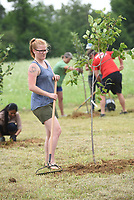 NWA Democrat-Gazette/FLIP PUTTHOFF <br /> FRUIT TAKING ROOT<br /> Laura McArthur with Samaritan Community Center checks a fruit tree she's planting Saturday June 17 2017 at the new location of the community center's garden at South Eighth Street and Pleasant Grove Road in Rogers. The garden is being moved in phases from its current location at the Samaritan Community Center in Rogers to the larger space, said Debbie Rambo, executive director of Samaritan Community Center. Volunteers planted 50 apple, pear and persimmon trees Saturday and a deer-proof fence was erected. The Fruit Tree Planting Foundation donated the trees, said Rico Montenegro, with the The Fruit Tree Planting Foundation.