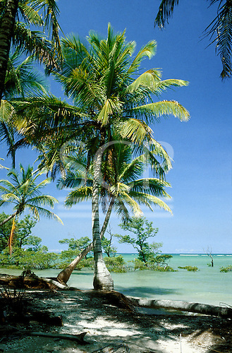 Itaparica Island, Brazil. Tropical beach, crossed palm trees, green sea, blue sky and a few mangroves in the sea. Bahia.