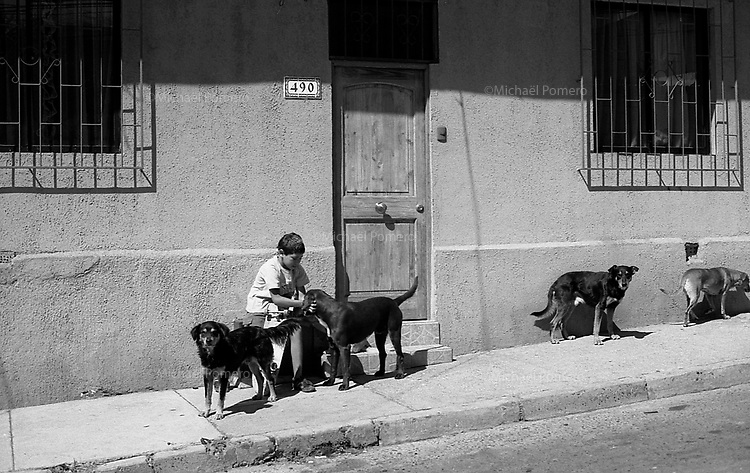 01.2010 Valparaiso (Chile)<br /> <br /> Jeune gar&ccedil;on caressant des chiens de rue.<br /> <br /> Young boy petting the dogs in the street.