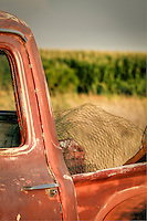 Ford Truck with chicken wire - Arizona (vertical)