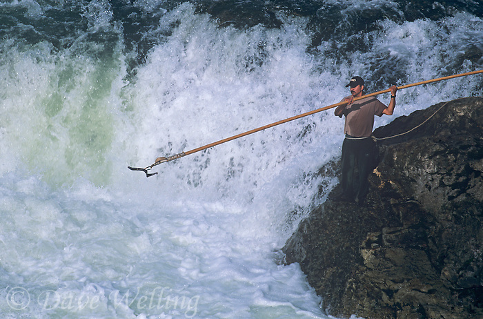 731000322 a native canadian american indian gig fishes for salmon at a waterfall along the bulkley river in british columbia in canada