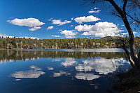 Lynx Lake in Prescott National Forest, as seen from the Lynx Recreation Trail in winter.  A few puffy clouds reflect off of the water's surface while a leafless tree frames the image.
