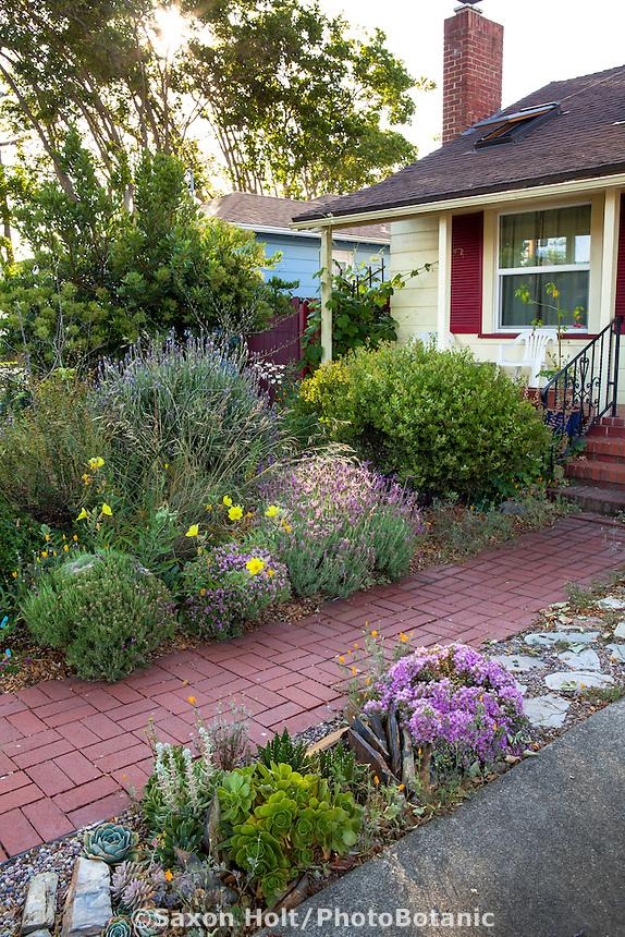 California Native Drought Tolerant Plants Home Decorating