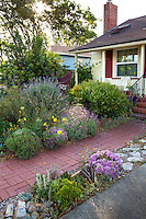 Brick path leading to house in summer-dry, drought tolerant front yard California native plant garden, Richmond California